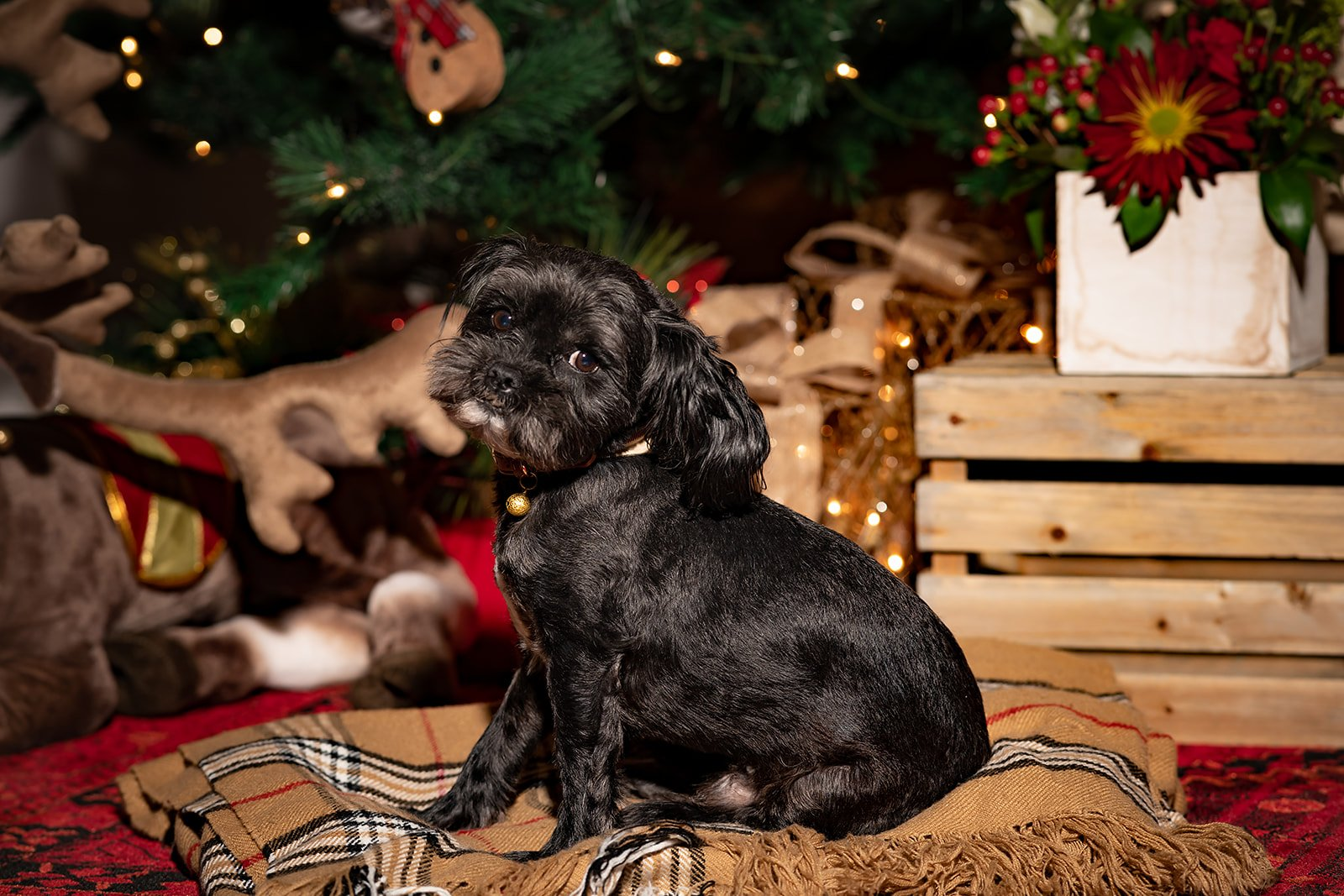 A Doggie Holiday Special